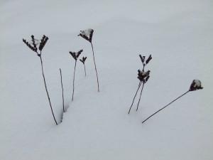 neige_noel_2010_plantes