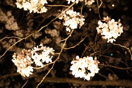 Japan_2014_Ito_Peninsule_Izu_04