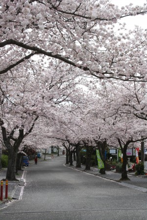 Japan_2014_Ito_Peninsule_Izu_05