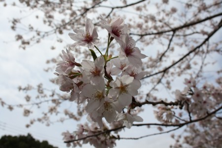 Japan_2014_Ito_Peninsule_Izu_06