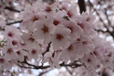 Japan_2014_Ito_Peninsule_Izu_07