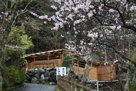 Japan_2014_La_vallee_oigawa_sumatakyo_07