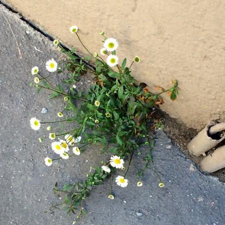 fleur_ville