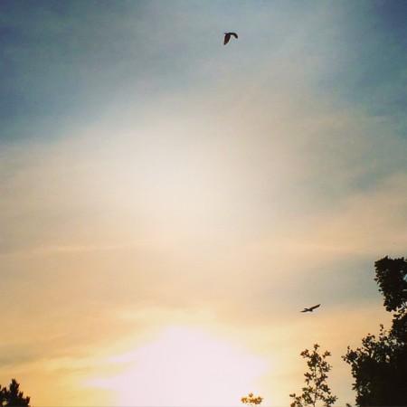 oiseaux-envol-soliel-by-sironimo