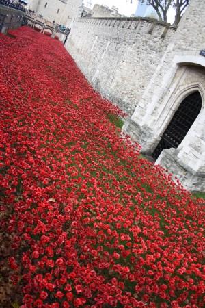 londres_nov_2014_poppies_tower_london_01