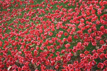 londres_nov_2014_poppies_tower_london_02
