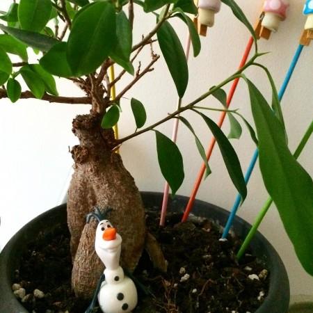 plante_automne_2015_01