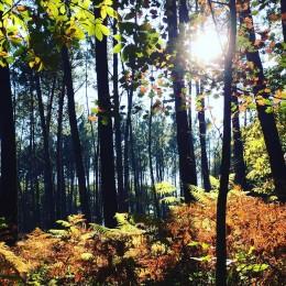 automne_2015_06