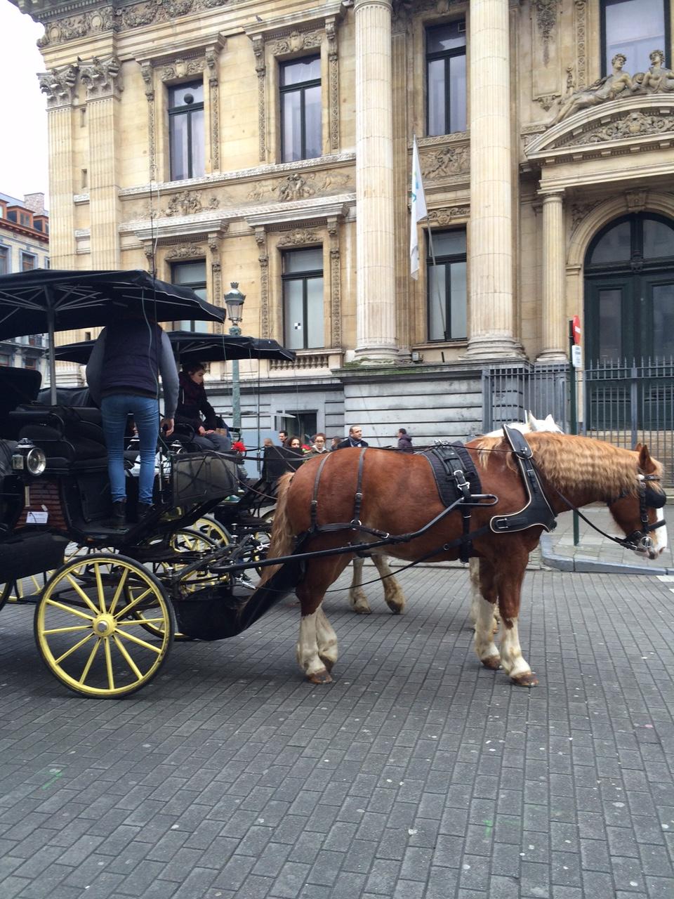 bruxelles_fev_2016_promenade_typique (9)