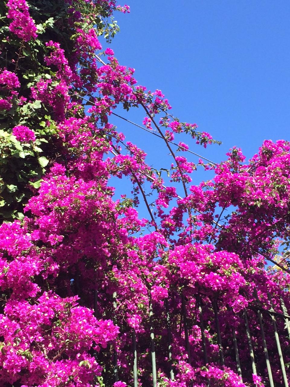 lisbonne_juin_2016_plantes_fleur