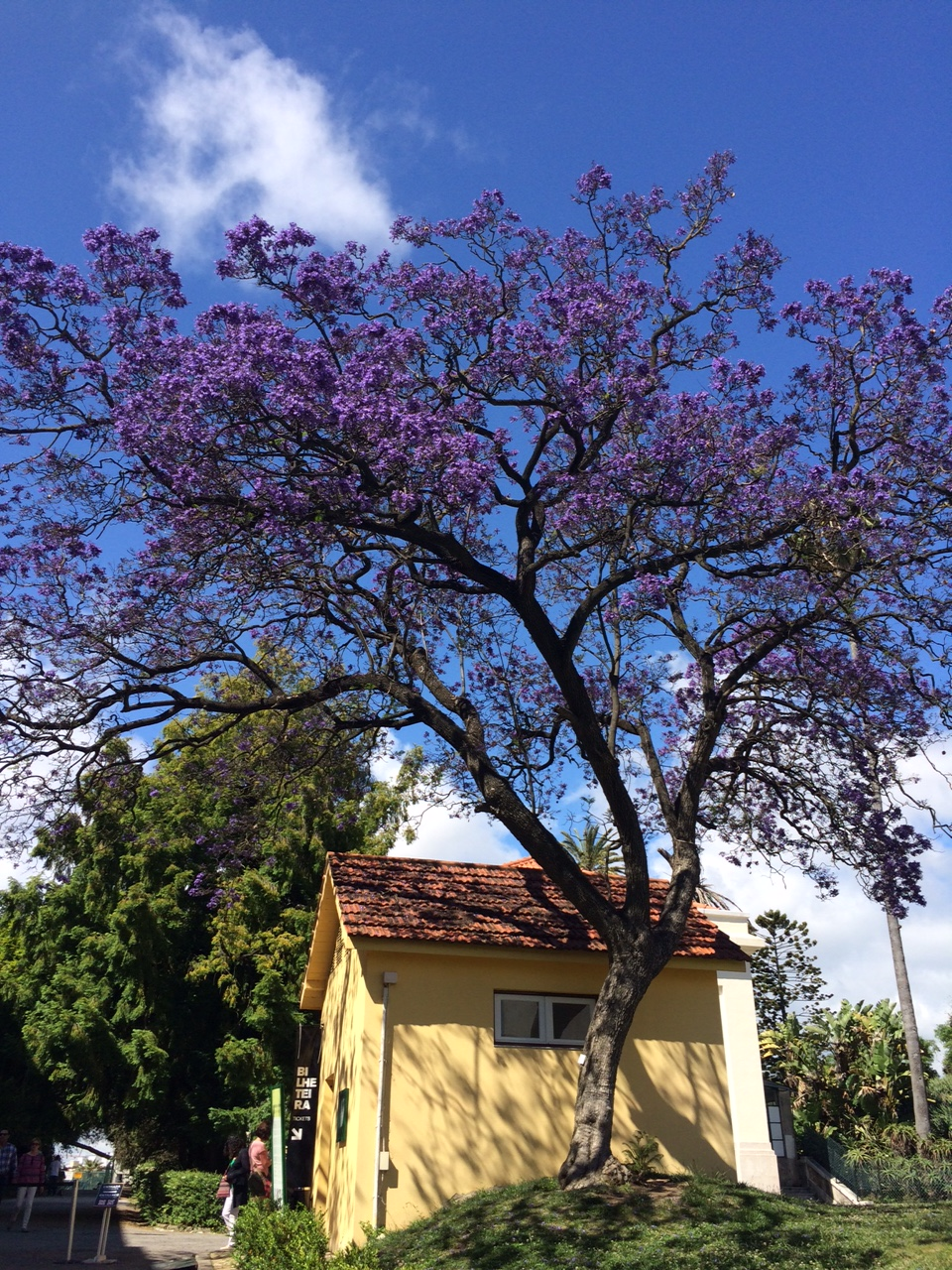 lisbonne_juin_2016_plantes_fleurs (13)