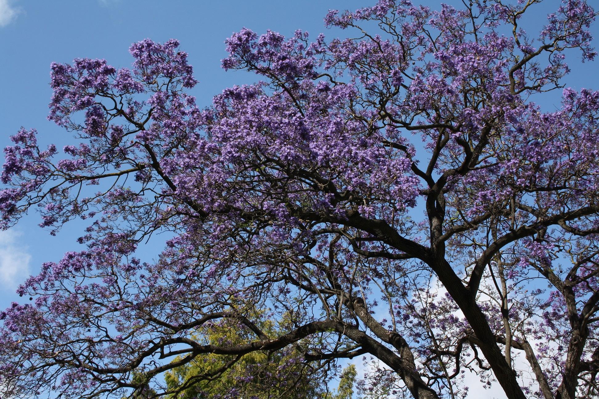 lisbonne_juin_2016_plantes_fleurs (3)