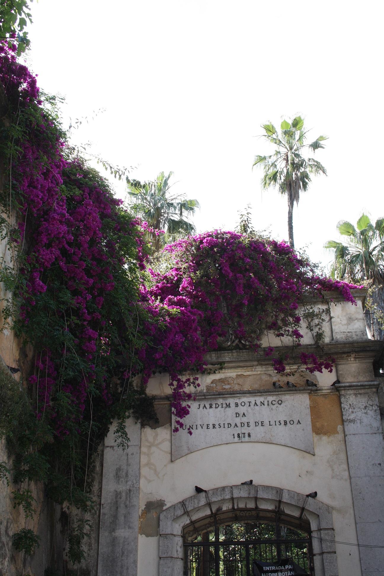 lisbonne_juin_2016_plantes_fleurs (5)