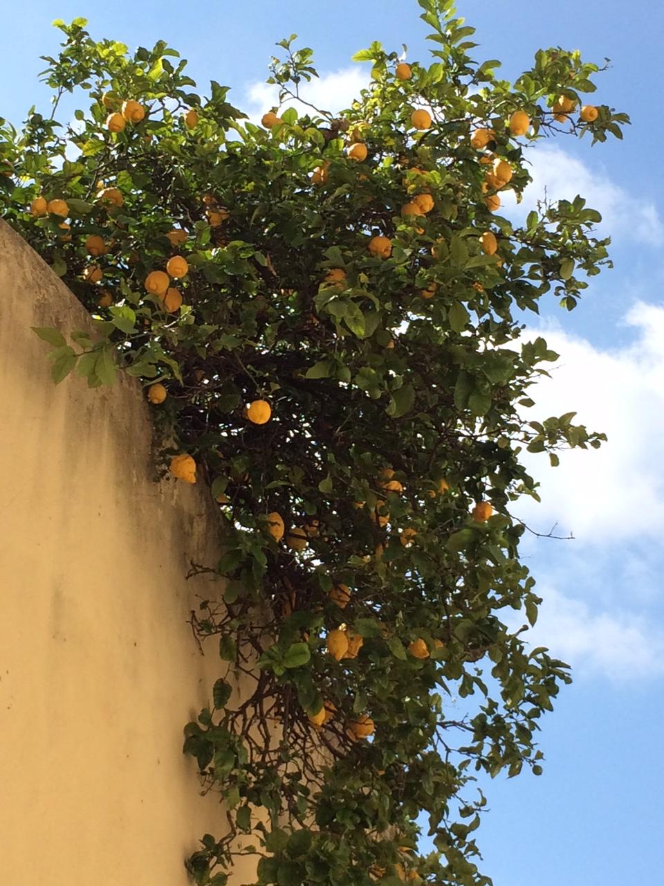 lisbonne_juin_2016_plantes_fleurs (7)