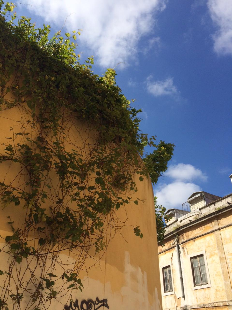 lisbonne_juin_2016_plantes_fleurs (8)