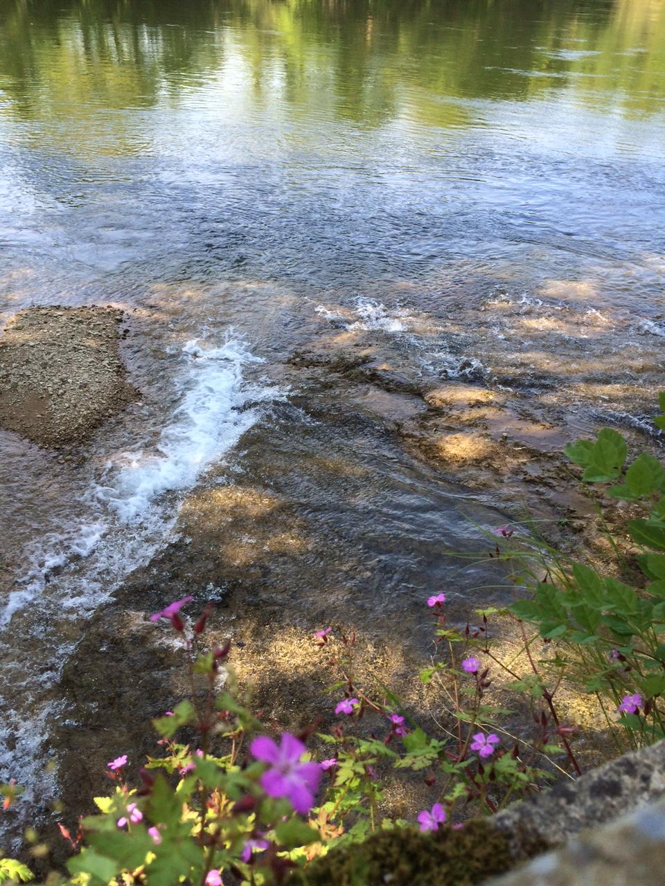 promenade_mai_2016_bord_de_riviere (3)