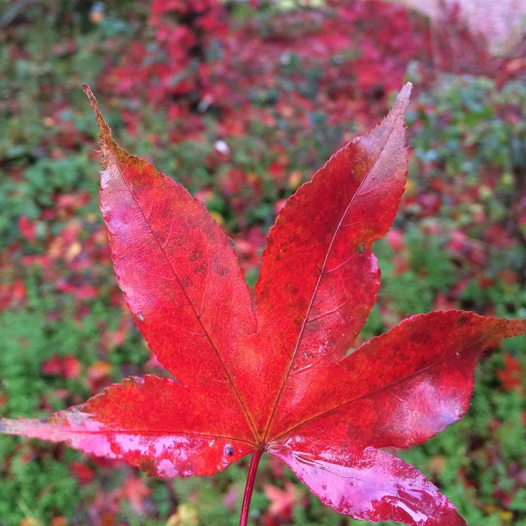 automne_2016_01