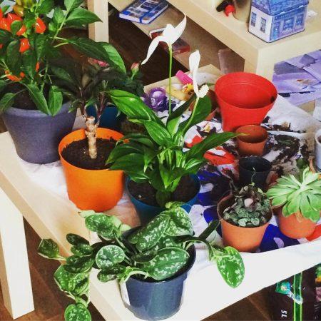 plantes_variees_2016