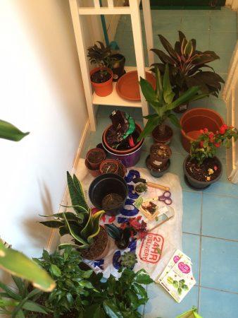 mars_2017_blog_sironimo_jardinage (1)