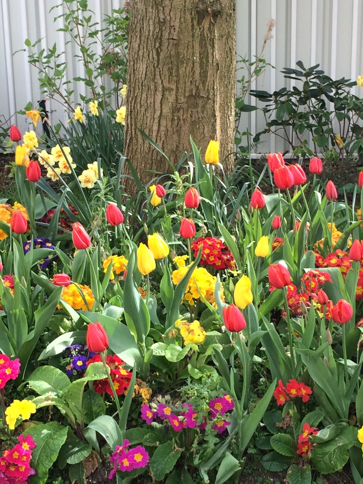 blog_sironimo_fleurs_tulipes_avril_2017 (2)
