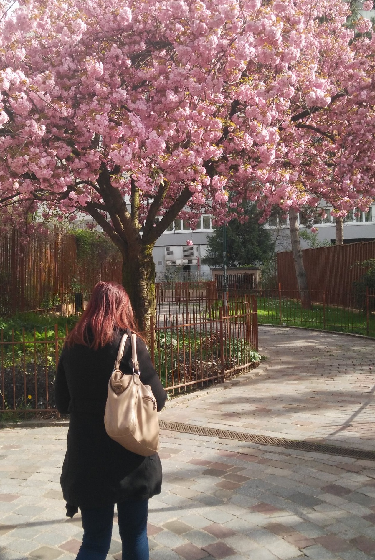 sironimo_cerisier_fleurs_avril_2017_02