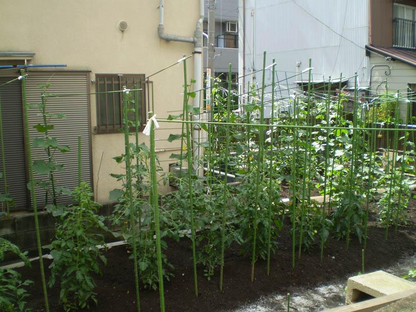 Le jardin de papy ii for Le jardin en juin